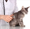 Ветеринарные клиники в Артемовском